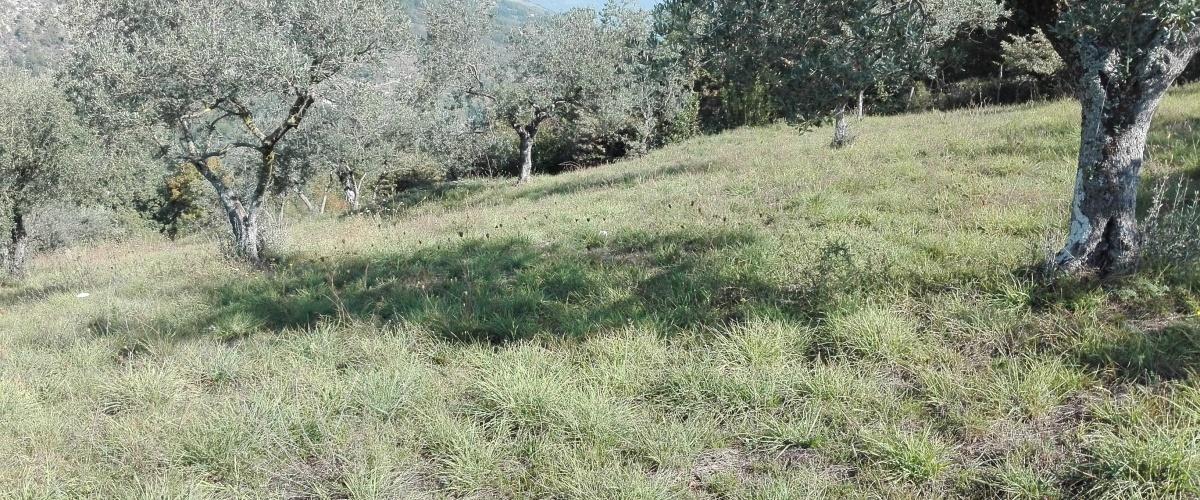 Fumone, Lazio, ,Agricolo,in Vendita